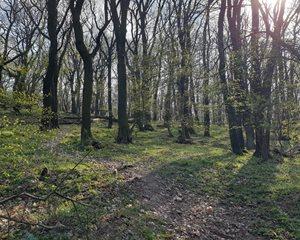 les v okolí